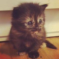 #cute #kitten #looks #sad #bigeyes #adorable #cool #colors #colorful #fluffy #littlepaws Big Eyes, Kittens, Sad, Colorful, Photo And Video, Cool Stuff, Cute, Animals, Instagram