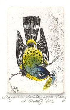 Magnolia Warbler by Marina Terauds, etching