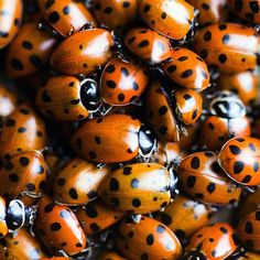 """Ladybugs, lots & lots of ladybugs"" This movie was chock full of hope. Loved her spirit.Also lovely to listen to on tape.the Narrator really brings it to life. Under the Tuscan Sun Milk Duds, Creature Of Habit, Under The Tuscan Sun, Orange You Glad, All Things Cute, Computer Wallpaper, Its A Wonderful Life, Cool Pictures, How To Find Out"