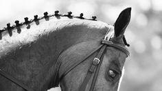 Horsealot photographie • Horsealot Uniquine Photography