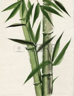 Original art watercolor painting of bamboo Asian style painting Stock Photo