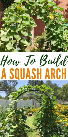 How To Build a Squash Arch - You can build many of these that provide a beautiful garden structures that produces amazing squash and won't break the bank! I will be doing this project this year as I am growing butternut squash for the first time. #squash #homestead #gardening