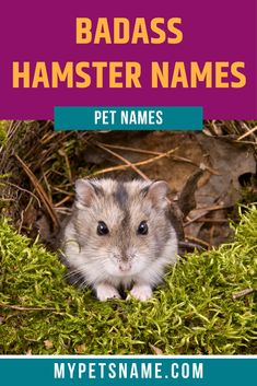 Figuring out badass hamster names might not be the easiest thing, considering how cute, adorable and tiny these little fluffballs are. Which is why we've prepared a list of our favorites to give you some inspiration.  #hamsternames #badasshamsternames #namesforhamsters Bear Hamster, Cute Hamster Names, Cute Hamsters, Cool Pet Names, Cute Names, Christmas Names, Name Inspiration, Free Plants, Losing Weight