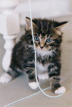 cute black kitten @weddingchicks