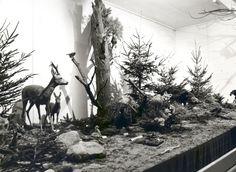 fries nat.hist museum 1970