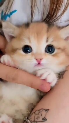 Baby Animals Super Cute, Cute Wild Animals, Cute Baby Dogs, Baby Animals Pictures, Cute Cats And Dogs, Cute Animal Videos, Cute Little Animals, Cute Animal Pictures, Baby Cats
