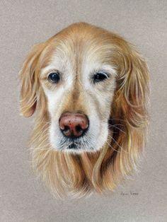 "Pencil Drawings Daily Paintworks - ""Golden Girl"" - Original Fine Art for Sale - © Heidi Rose - Animal Paintings, Animal Drawings, Pencil Drawings, Art Drawings, Golden Retriever Art, Color Pencil Art, Pastel Art, Colorful Drawings, Dog Portraits"