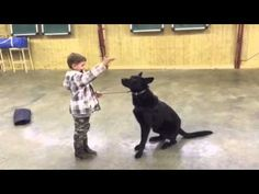 Black German Shepherd, A Boy, A Bad Guy, Protection Dog For Sale, Gunner - YouTube