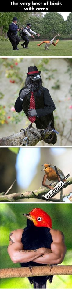 Birds with human arms…
