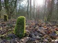 Tijdens het wandelen trok dit hoopje mos mijn aandacht. Dit groene mostorentje, wellicht een begroeide rest van een stammetje sprong er echt uit tussen alle bruine blaasjes. En schitterde door de zon