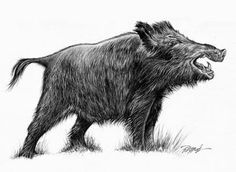 Wild Boar, Pyrography, Adult Coloring Pages, Animals And Pets, Hunting, Wildlife, Carving, Drawings, Ideas