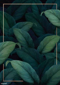 New Wallpaper Pattern Green Tropical Ideas Fond Design, Web Design, Leaf Background, Background Patterns, New Wallpaper, Pattern Wallpaper, Tropical Wallpaper, Design Mignon, Leave Pattern