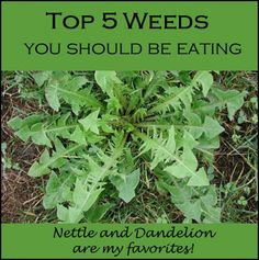 Top 5 Edible Weeds | ecogreenlove via @Margarita Andreeva
