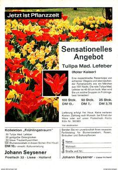 Original-Werbung/ Anzeige 1962 - TULPEN ROTER KAISER /JOHANN SEYSENER - LISSE/ HOLLAND - Ca. 120 X 170 M - Werbung