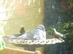 Essential Wildlife Gardening Gifts: Bird Bath An Essential Garden Item Garden Items, Garden Gifts, Bird Watching, Wildlife, Birds, Gardening, Bath, Country, Flowers