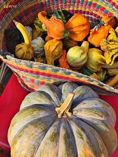 Happy fall season season greetings pinterest happy fall fall season merrifield 2015 m4hsunfo Image collections