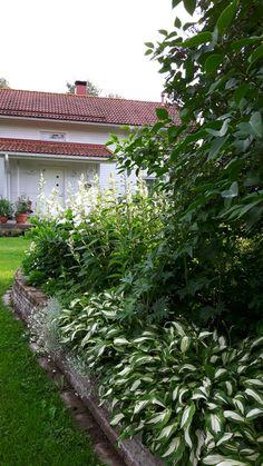 Valkoinen perennapenkki  kesä 2016 Helena Nykänen