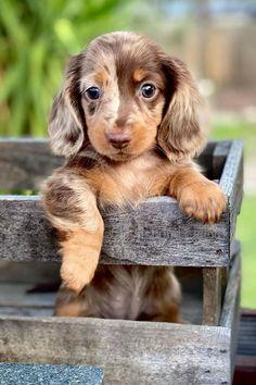 Super Cute Puppies, Cute Baby Dogs, Cute Little Puppies, Cute Dogs And Puppies, Cute Baby Animals, Cutest Dogs, World Cutest Dog, Baby Animals Pictures, Cute Animal Photos