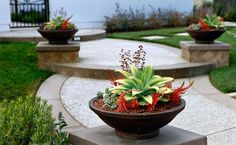 container garden for curb appeal, landscaping with containers, container pot design