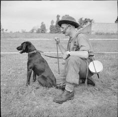 BRITISH ARMY NORMANDY 1944 (B 6499)   A sapper of No. 1 Dog Platoon, 277th Field Park Company, Royal Engineers, with his dog 'Nigger', Bayeux, 5 July 1944. The dogs were used to hunt for mines, especially the all-wooden 'Shoe Mine' which was otherwise undetectable.