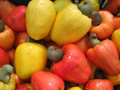 Caju in Brasil. The colorful and tasty cashew fruit - the nut we know is the small part. Fruit And Veg, Fruits And Vegetables, Fresh Fruit, Colorful Fruit, Tropical Fruits, Delicious Fruit, Tasty, Brazilian Fruit, Acerola
