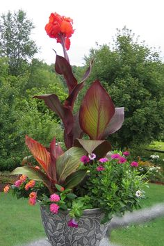 Tropicanna cannas in mixed container garden Tropicanna Black canna in back as thriller with brilliant red flower, accented with original Tropicanna canna in foreground as filler, with bright orange, pink and white annual flowers as the spiller Outdoor Plants, Outdoor Gardens, Potted Plants, Beautiful Gardens, Beautiful Flowers, Beautiful Scenery, Flower Garden Design, Tropical Garden Design, Annual Flowers