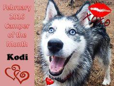 February 2016 - Camp Mimi Pet Resort Video