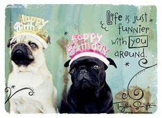 Birthday Pugs - Taylor Swift Happy Birthday Ecard from American Greetings