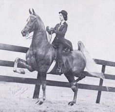 World's Grand Champion Sea of Secrets traced to Kalarama Rex on both his sire and dam's side.