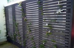 Jasmine espalier - a great use of walls in a small space. HEDGE Garden Design & Nursery