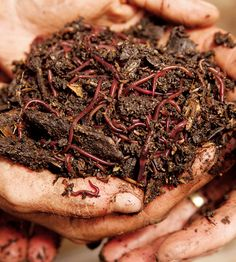 Composting with Worms Worms turn garbage into good-for-your-garden organic fertilizer. Organic Compost, Organic Fertilizer, Organic Gardening, Gardening Tips, Vegetable Garden Fertilizer, Garden Compost, Worm Farm, Worm Composting, Earthworms