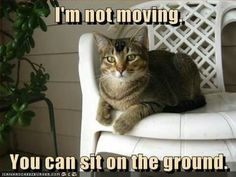 I'm NOT Moving ... You Can Sit On The Ground