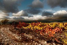 El color de las viñas by MÓNICA LÓPEZ-DÁVALOS HERNÁEZ on 500px