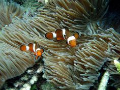 gint: close up nemo by suckingshell, via Flickr