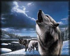 Wölfe bild 6