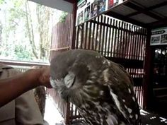 The happiest owl in the world!