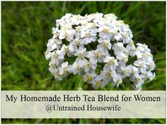 How to Make a Homemade Herb Tea for Women