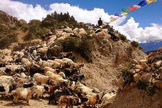 Nyi La Pass, Upper Mustang - Kaski, Nepal   AFAR.com