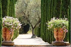 Anduze Pots Alley Trees