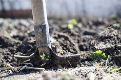 How To Plant A Vegetable Garden – Gardeners Palace