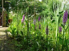 Genieten van #orchideeën in eigen tuin. #mooi #Zevenaar. Maandag 9 juni 2014. Via twitter @henkeikholt13