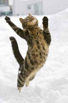 35 Animals Who Just Want To Dance - BlazePress