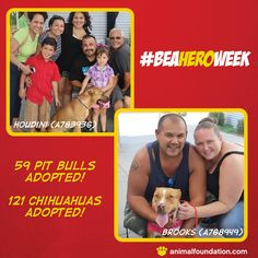 YOU ROCK, VEGAS! The numbers are in, and thanks to heroes like YOU, 121 Chihuahuas and 59 Pit Bulls (including Houdini and Brooks!) found pawsome new forever homes during our Be A Hero Week initiative!   Still looking for a new furry (or not-so-furry) family member? We have more than 350 great pets waiting to go home with you! View them online at animalfoundation.com!  (Photo Credits: Volunteer Mel L.)