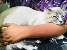 Another happy client enjoying his relaxing spa day. #catgrooming #cats #catlover #cat #boy #losangeles #dtla #lalive #california #koreatown…