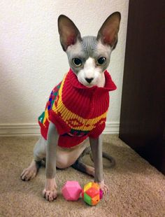 Sphynx cats in Sweaters.
