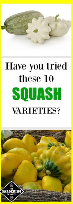 Try these 10 squash varieties in your garden? Everything from gourds to pumpkins. There is squash that can be grown in every season. Try planting these today.
