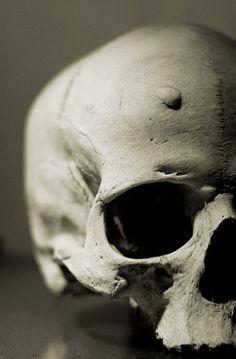 "moshita: "" close up of a human skull with a hole in the bone Cristina Chirtes "" Skeleton Bones, Skull And Bones, Crane, Skull Reference, Sketch Tattoo Design, Draw On Photos, Human Skull, Vanitas, Animal Skulls"
