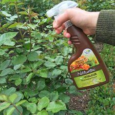 Naturen Bio Vitalkur als Sprühmittel
