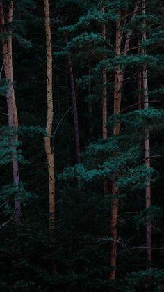 Wallpaper Iphone – Tree Forest iPhone Wallpaper Source by Beste Iphone Wallpaper, Tree Wallpaper Iphone, Nature Wallpaper, Iphone Wallpapers, Witch Wallpaper, Iphone Homescreen Wallpaper, Tree Forest, Dark Forest, Forest Art
