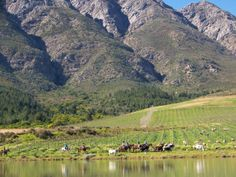 Horse riding near Tulbagh with the mountains soaring above. Walk For Life, South Afrika, Africa Travel, Where The Heart Is, Horse Riding, West Coast, Beautiful Places, Places To Visit, Mountains